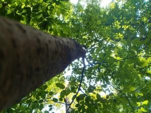 tree2344451